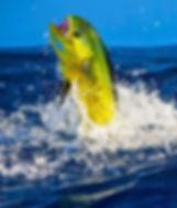 Offshore fishing Pensacola, FL
