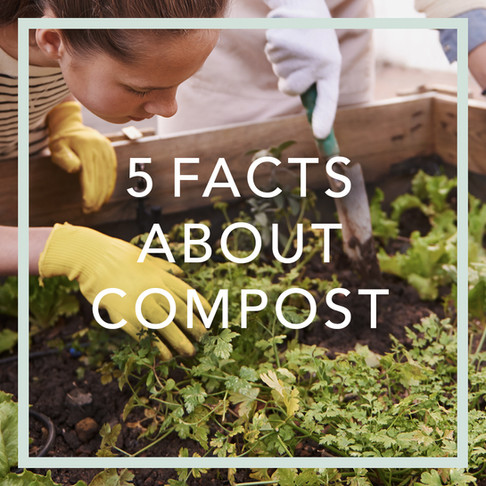 Does compost = compost? 5 facts you should know about compost