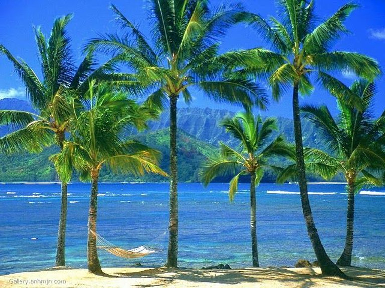 Hawaii Palm Trees .jpg