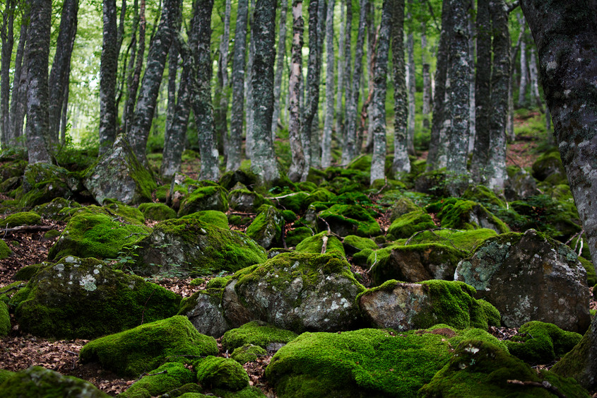 Mère Nature - Carmen Legros Photographe
