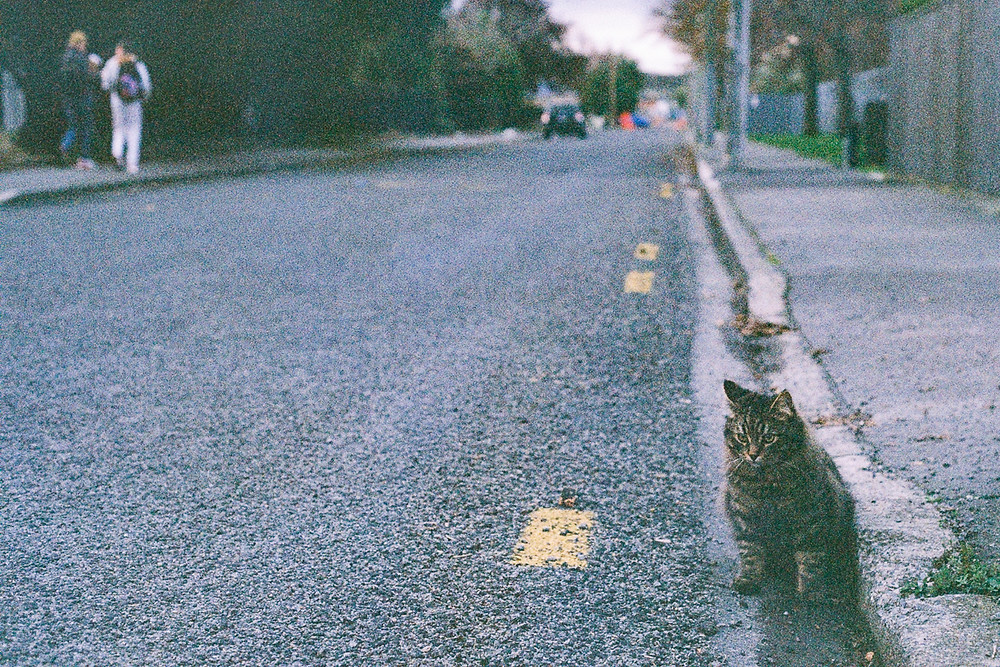 dark cat on street film photograph