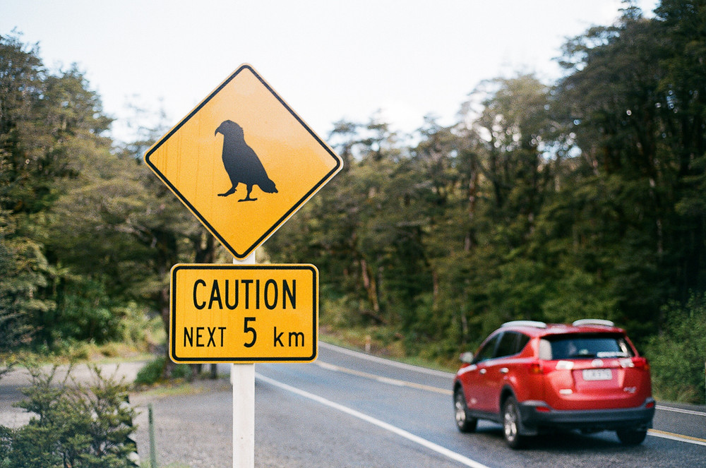 Kea parrot caution road sign in New Zealand