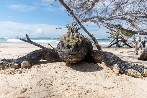 Galapagos Paradise