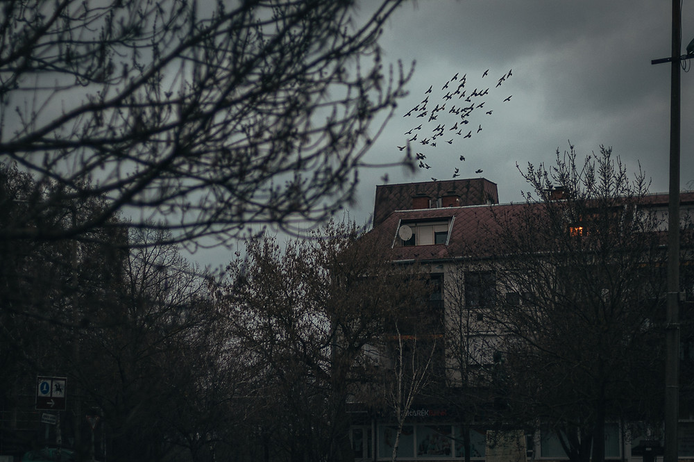 Moody shot of flock of pigeons flying over building, Turkeve, Hungary