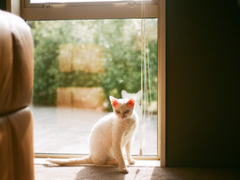 Experiments in Photography: 35mm Film