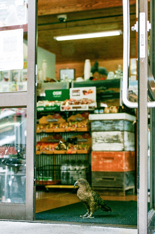 Film photograph of kea parrot in new zealand shop