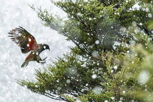 Winter's Leap