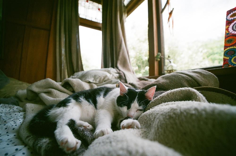 sleeping cat film photograph