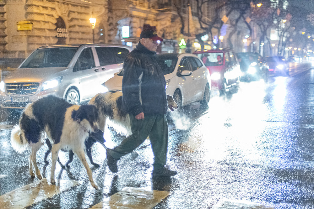 A man walks with two long dogs across street during rain, Budapest
