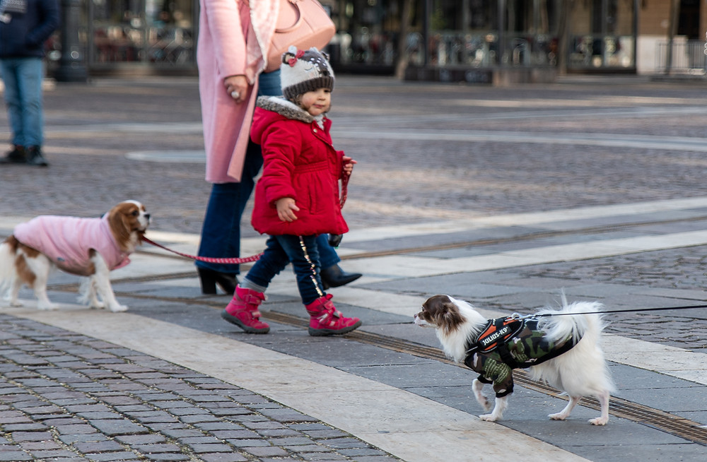 A boy walks past and stars at a small dog in Budapest