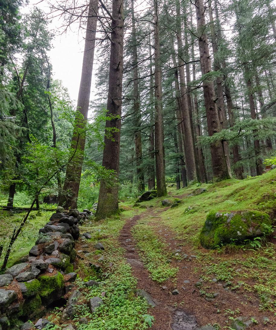 Walking path through cedar forest in Manali india