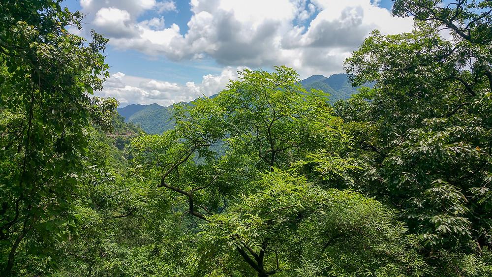 Lush green forest in Rishikesh, India