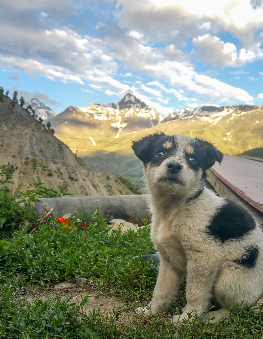 Adorable puppy in Keylong India standing in front of icy Himalayan mountain
