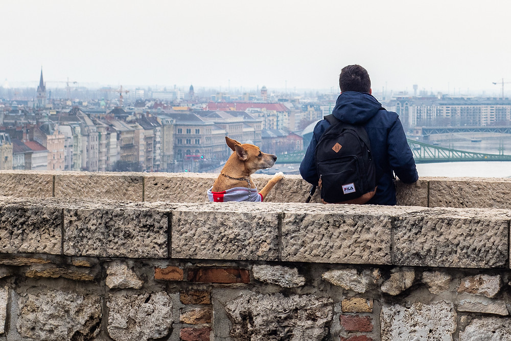 Man and dog overlook the view from Castle District in Budapest