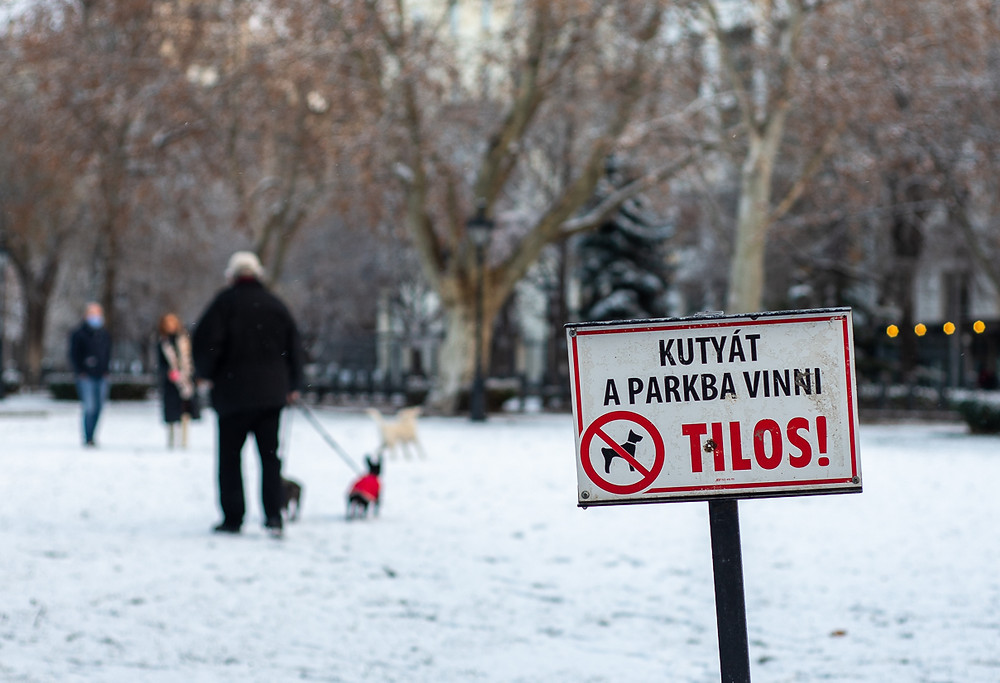 Dog and owner walk on snowy grass next to dogs not allowed sign, Budapest