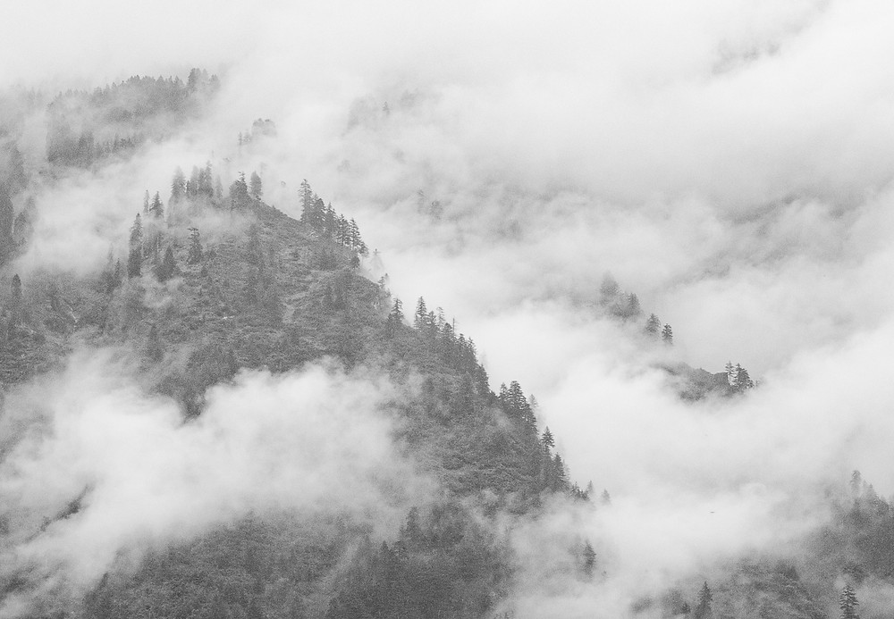 black and white landscape shot of trees and clouds in Manali India
