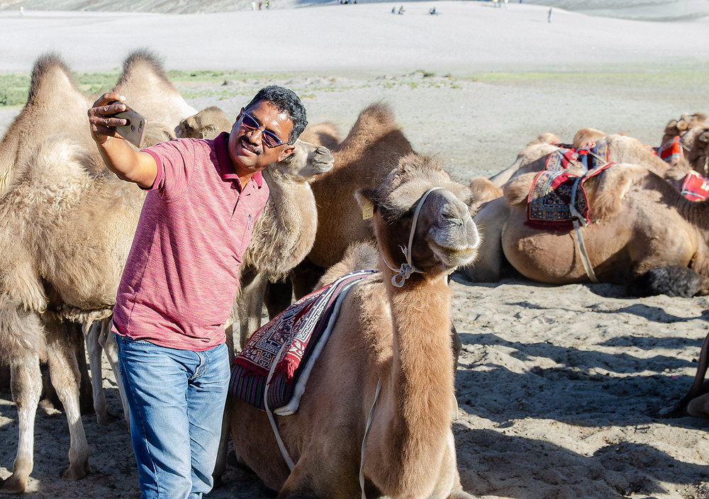 Indian tourist takes a selfie with a Bactrian camel in Nubra Valley, Ladakh, India