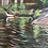 Thumbnail: White Pine with Orange Campsite Marker