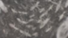 Capture d'écran 2018-11-01 à 16.15.00.pn