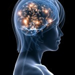 The Insane Brain