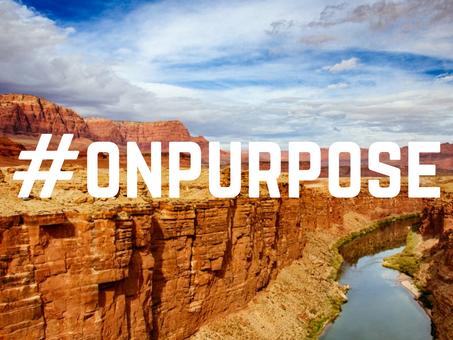 No Purpose - No Point