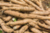 Pile of cassava bulb.jpg