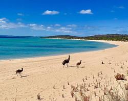 Emus1