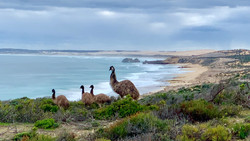 Emus2