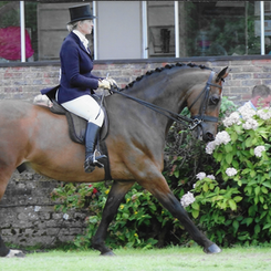 Justine has also had huge success across all showing disciplines