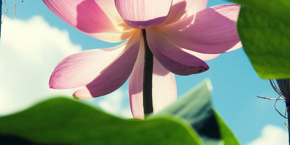 Becoming the Lotus: Afternoon Retreat by and for Sexual Assault Survivors