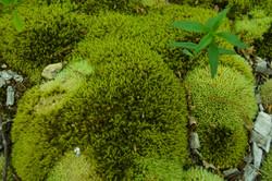 Beautiful Lush Moss