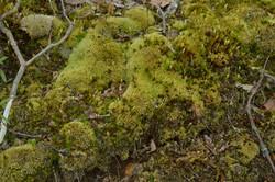 Moss in Autumn