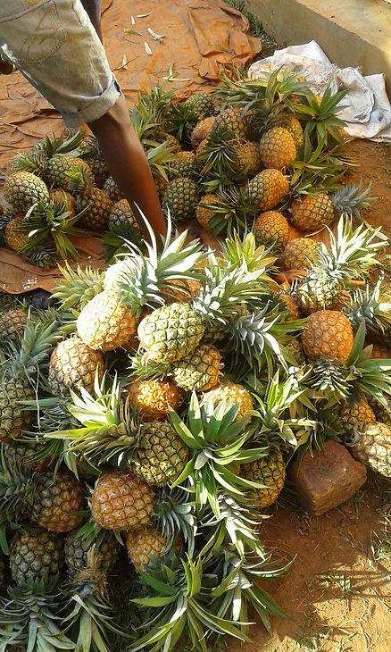 Ananashøsting feb.2021 Immis.jpg