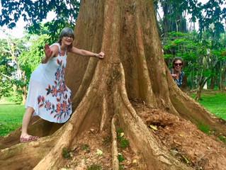 Avklimatisering i «Edens hage»