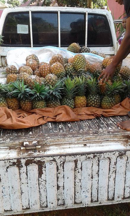 Ananas-høsting2 - febr.2021 - Immis.jpg