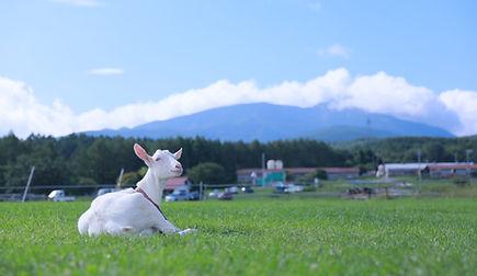 牧場写真.JPG