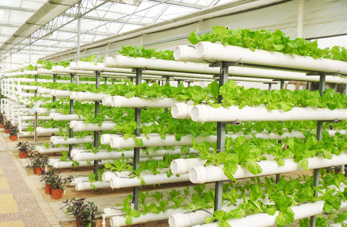 Vatodar Green WaterFarms  Aquaponics and