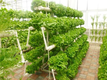 Methods to implement soil-less farming