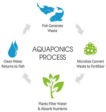 Aquaponics%20Cycle_edited.jpg