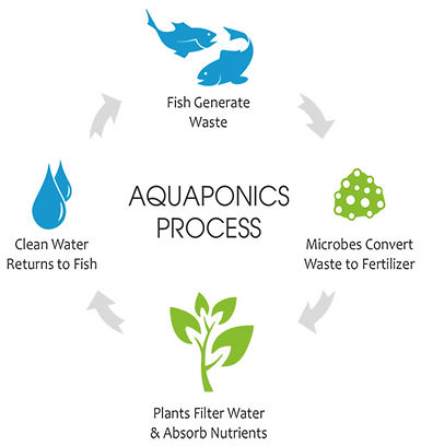 Aquaponics%20Cycle_edited.jpg