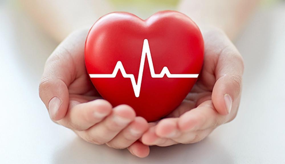 Photo d'un cœur traversé par une onde et porté au creux de deux mains