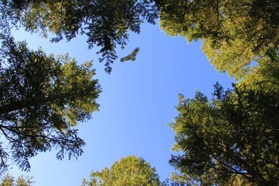 Trail at Teton Springs