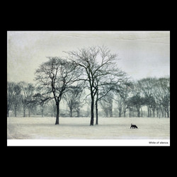 White of silence~静寂の白~
