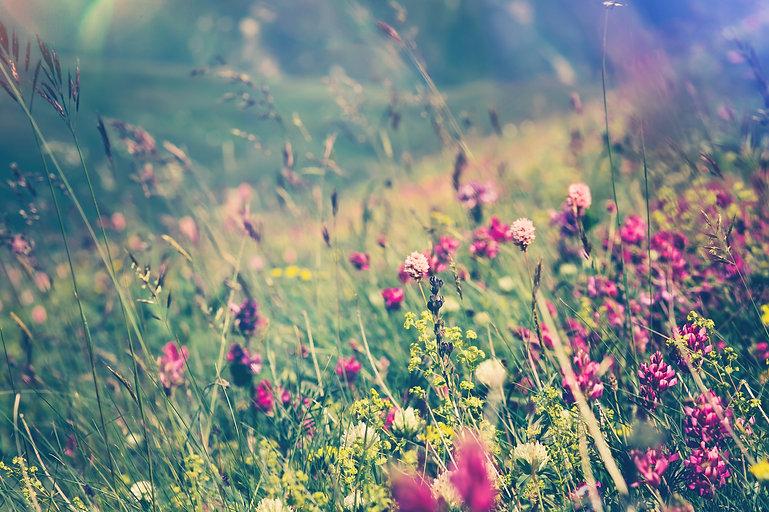 everest bloom photo.jpg