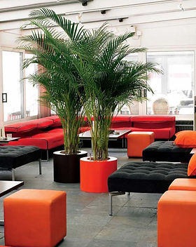 Areca Palm.jpg