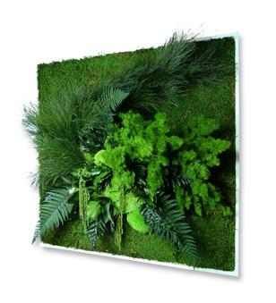 Mumlanmış Bitkiler İle Duvar Bahçe