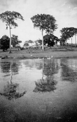 19 Koja 1944-46