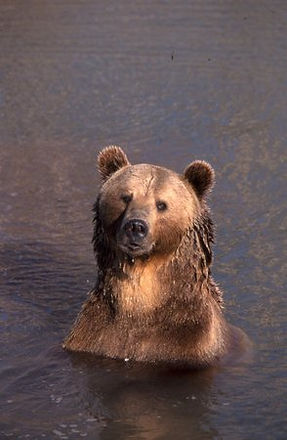 bear world.jpg