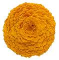 Lichen Installation Orange1.jpg