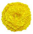 Lichen Installation - Yellow1.jpg